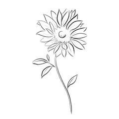 sun flower vector illustration