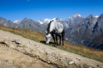 Grazing horse in the Caucasus Mountains