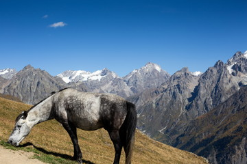 Horse on pasture in the mountains