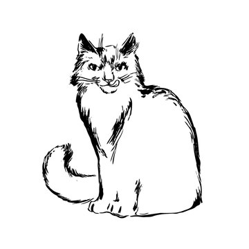 Hand drawn cat sketch illustration. Vector black ink drawing isolated on white background. Grunge style