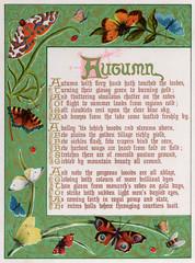 Decorative Border Illustrating Autumn, Moths Butterflies