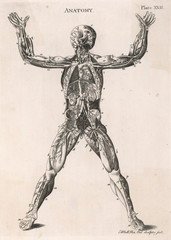 Anatomical Drawing of the Human Body