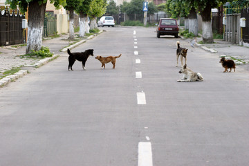 Acrylic Prints Eastern Europe dogs on street in romania