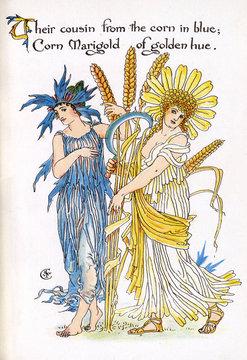 Cornflower and Corn Marigold