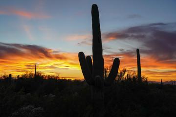 Fotorolgordijn Chocoladebruin Desert sunset with cacti silhouettes