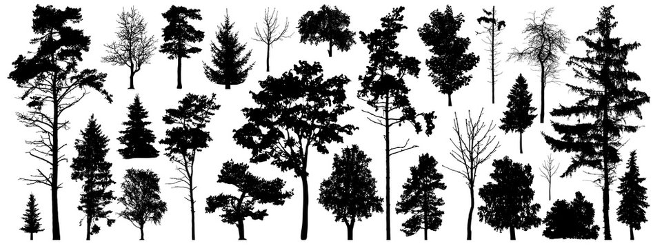 Tree silhouette vector. Isolated forest trees on white background