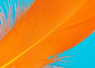 Orange feather isolated on blue background