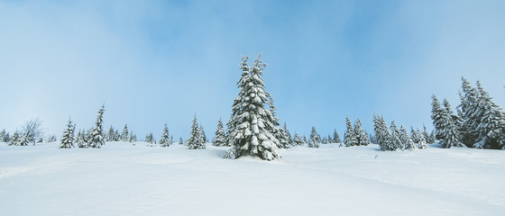 Alone tree covered with fresh snow