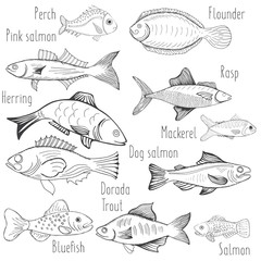 Vector illustration sketch - fish marketCard menu seafood isolated white. vintage design template, banner.