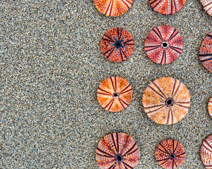 sea urchins shells on wet sand beach top view, space for text