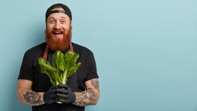 Nice food for healthy lifestyle. Satisfied man holds dieting organic product, prepares for making vegetarian salad of bok choy containing vitamins, wears black clothing, isolated on blue wall