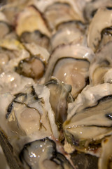 fresh oyster on ice