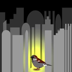 World Sparrow Day. Sparrow on the cityscape.