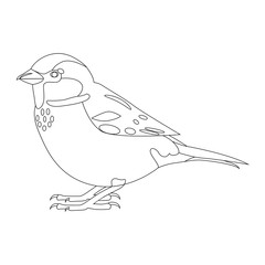 Sparrow. Simple contour vector illustration isolated on white.
