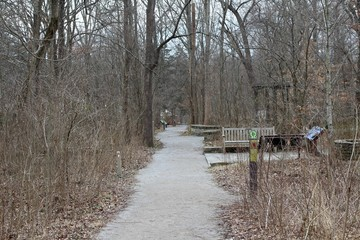 The long empty pathway in the forest on a cloudy day.