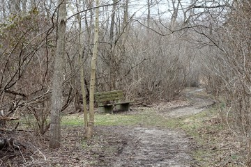 The old wood bench on the trail in the forest.