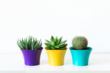 Various cactus and succulent plants in bright colorful flower pots against white wall. House plants on white shelf.