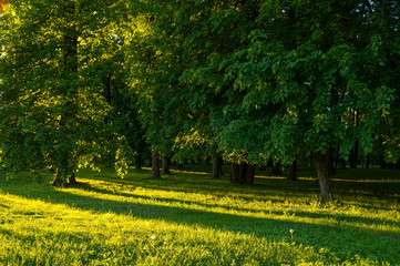 Spring landscape - park trees with grass on the foreground and sunlight shining through the forest trees