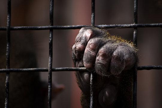 Monkey locked up at the zoo