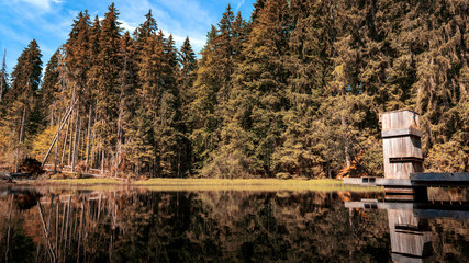 Boubin lake, primeval forest, Bohemian Forest National Park.