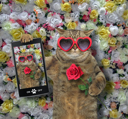 The funny cat in heart shaped sunglasses made a selfie with red rose. Background of roses.