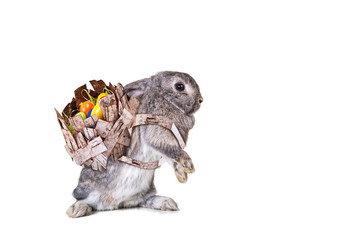 easter rabbit isolated with easter basket