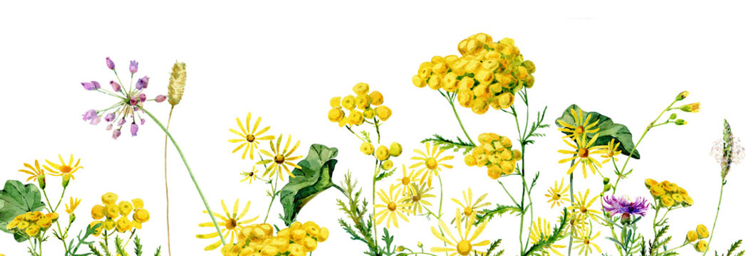 Background of wild yellow watercolor flowers