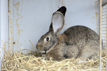 rabbit in front of the rabbit barn