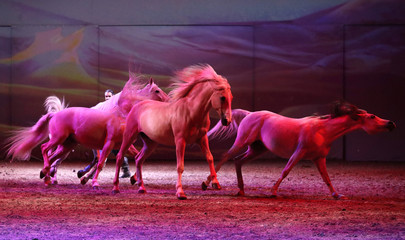 "Horses perform during a show ""Cavalluna, World of Fantasy"", in Brussels"