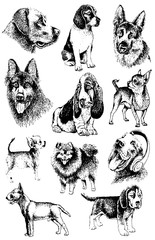 Graphical set of dogs isolated on white background,vector illustration,tattoo