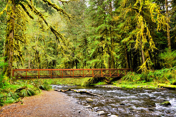 Bridge over river during springtime surrounded by moss covered trees, Olympic National Park, Washington, USA