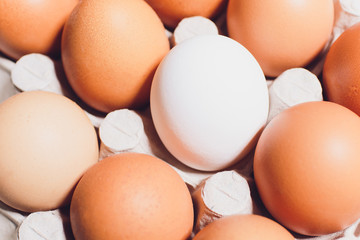 White chicken eggs opposite red in a cardboard box with empty space, background.