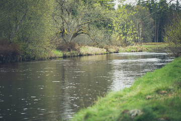 Idyllic river surrounded by willow and birch trees