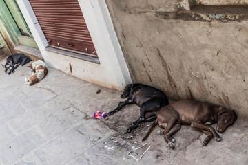 Varanasi, India, sleeping dogs between dirty walls in dirty, horrible streets