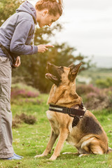 Dog training session outdoor