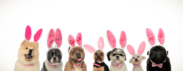 funny group of puppies wearing bunny ears for easter holiday