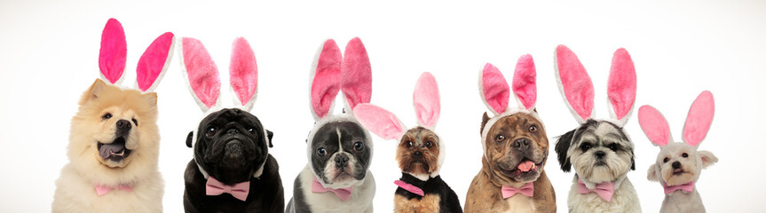 large group of dogs wearing bunny ears for easter