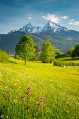 Fototapete - Idyllic mountain scenery in the Alps with blooming meadows in springtime
