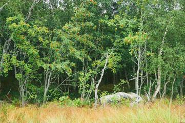 FBeautiful forest in Finlan.