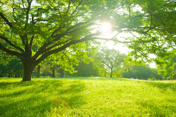 Fotobehang Pistache sunshine tree in the garden