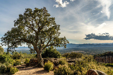 view on valley of roquebrune sure agens, cote d'azur, france