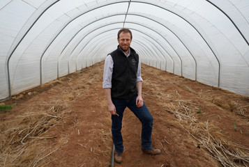 Owner of Cobrey Farm Chris Chinn poses for a photograph in an asparagus field, at his farm in Ross-on-Wye