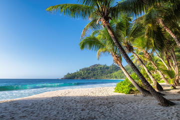 Sunny beach with palm and turquoise sea.  Summer vacation and tropical beach concept.