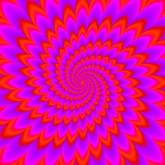 Fototapeta Red flower blossom. Optical expansion illusion. obraz