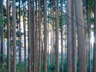 Printed roller blinds Bamboo 林の日差し