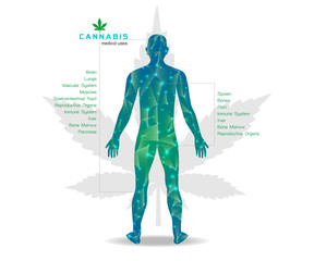 Marijuana plant and cannabis in body white backgrounds.