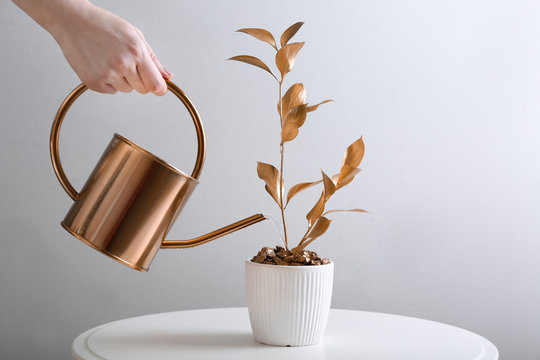 Woman watering golden houseplant on table
