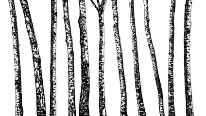 Set of Birch Trees. Hand Drawn In Sketch Style. Nature Template. Freehand Drawing. Vector. Illustration. Isolated On White Background.