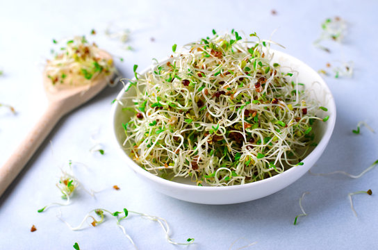 Fresh Green Organic Alfalfa Sprouts on Bright Background