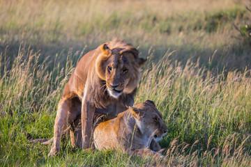 Predators in natural habitat